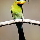 Rainbow Bee- Eater With Insect by Kym Bradley