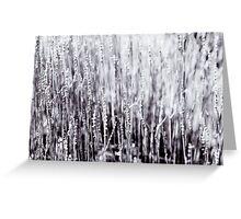 Grey Foliage Wall Art Greeting Card