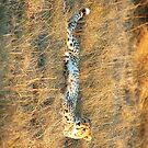 cheetah pad by shaft77