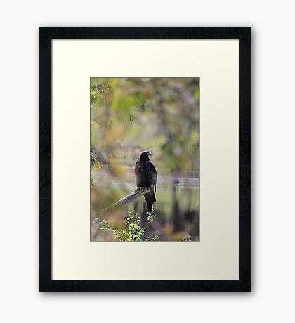 eagle - sneak peak Framed Print