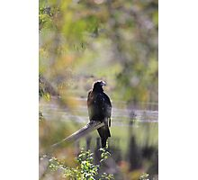 eagle - sneak peak Photographic Print