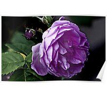 """""""Grandma's Rose..."""" Poster"""