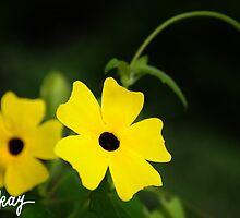 Sunny Lemon Star by milkayphoto