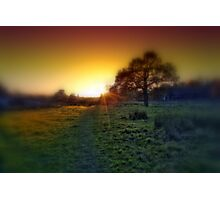 Oak tree at sunset Photographic Print