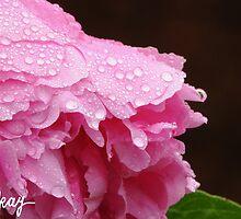 Glisten by milkayphoto