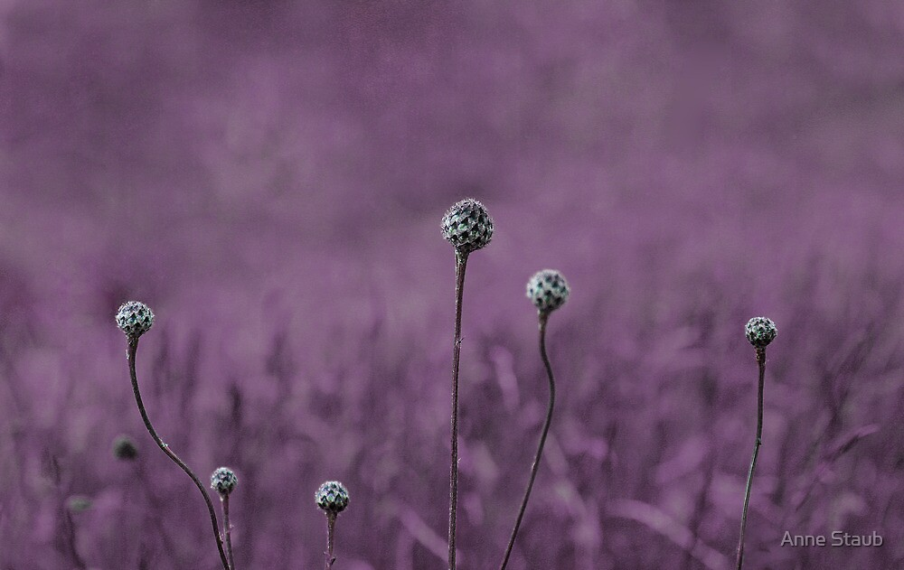 Purple garden by Anne Staub