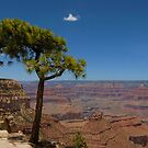 Solitary Tree, Grand Canyon by Michiel Meyboom