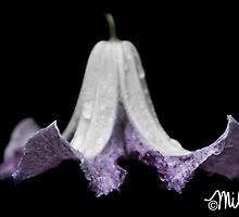 Belle by milkayphoto