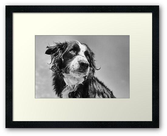Dog in black & white by Karen Havenaar