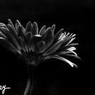 Film Noir by milkayphoto