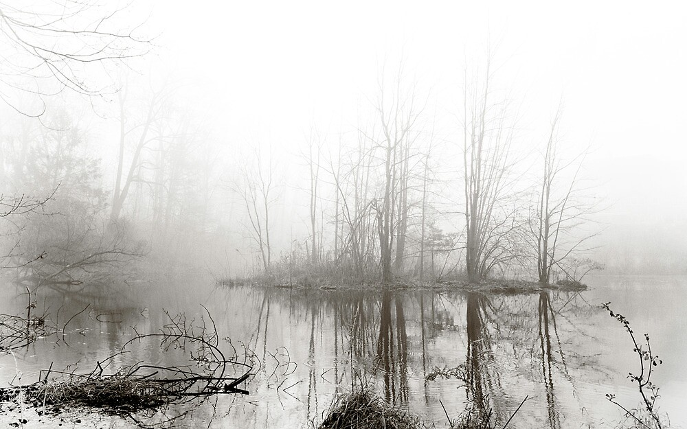 Just this morning at the pond by alan shapiro