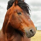 Windy portrait of a stallion by Mariann Rea