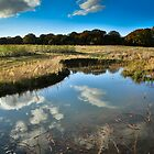 Betty's Wood Ponds in Autumn by Sarah Walters