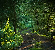 Evening path by Sarah Walters
