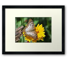 White Peacock Butterfly On A Yellow Flower Framed Print