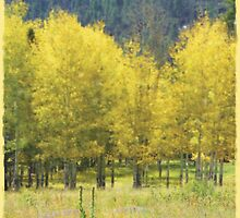 Fall Trees  by MStrause