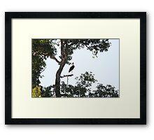 Bill stork  Framed Print