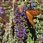Butterfly and Green Bee by JDToomer