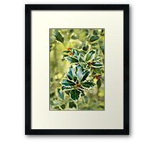 Winter Holly. Framed Print