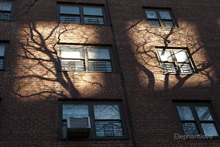 Winter Light by Elephantlove