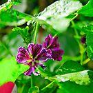 Autumn Flower by A.David Holloway