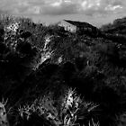 Cactus farm, Tenerife by stronart