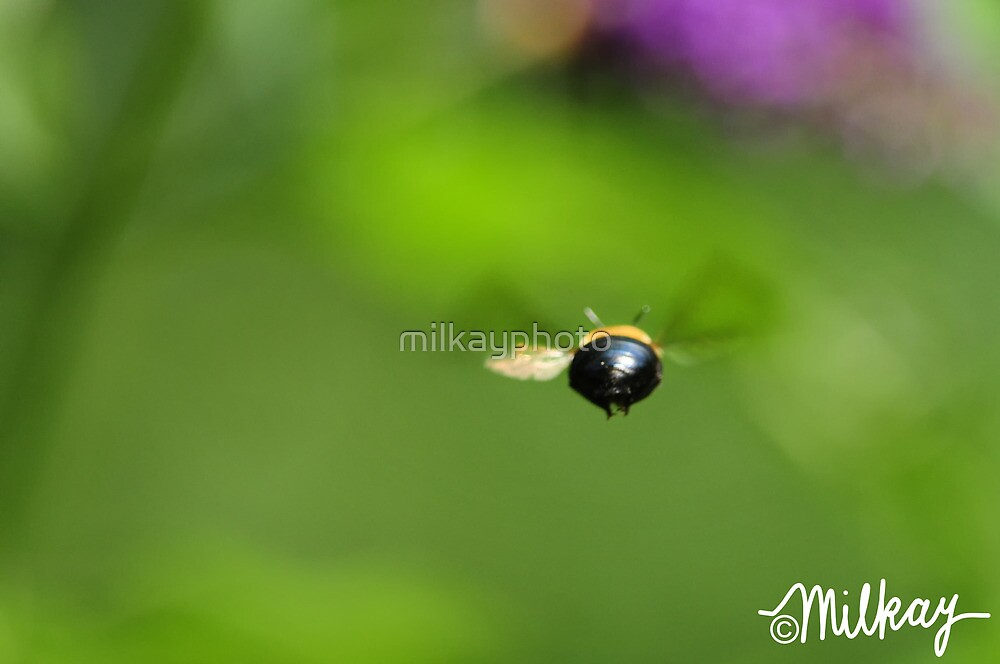 Flight of the Bumble Bee by milkayphoto