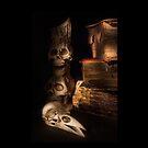 The Alchemist by Ann Garrett