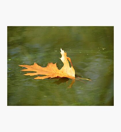 Autumn floating away... Photographic Print