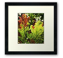 Autumn Oak Leaves Framed Print