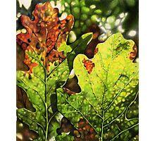 Autumn Oak Leaves Photographic Print