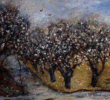 white flower trees at Stones Corner by glennbrady