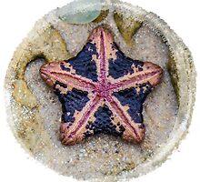 star fish by Angela Lisman-Photography