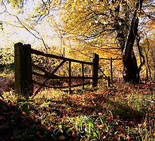 Autumn Gate by Nigel Bangert