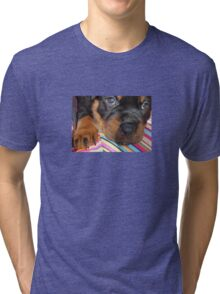 Young Female Rottweiler Making Eye Contact Tri-blend T-Shirt