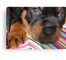 Young Female Rottweiler Making Eye Contact Canvas Print