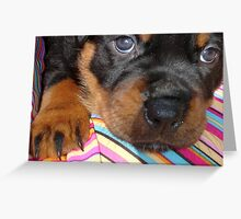 Young Female Rottweiler Making Eye Contact Greeting Card