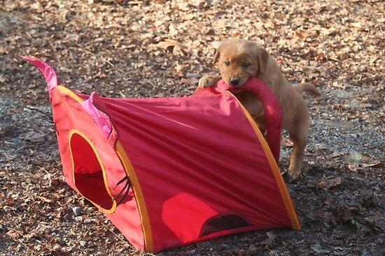 Ben- Cat Tent Wrestling by goldnzrule