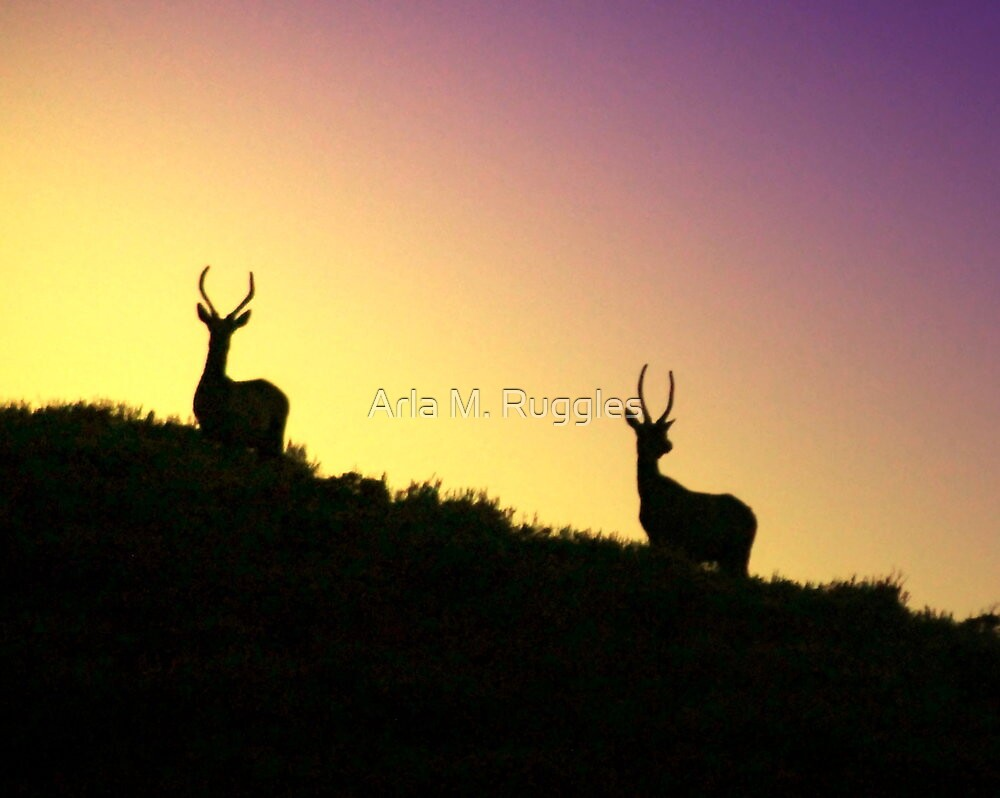 Twilight Elk by Arla M. Ruggles