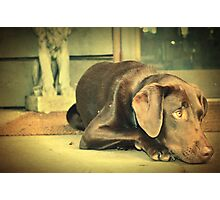 Cute on the Porch Photographic Print