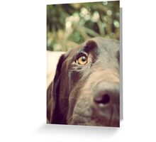 Dogging It Greeting Card