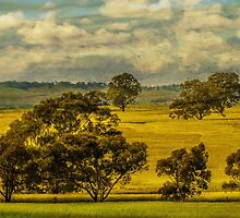 Canola Crop by Bette Devine