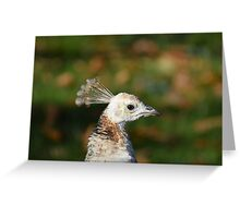 White Peacock Portrait Greeting Card