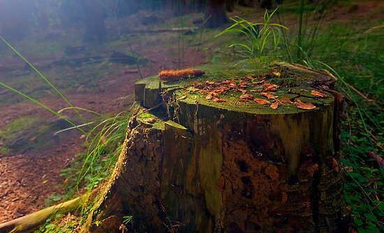 Nature's Table by Keld Bach