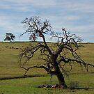 Beautiful Old Oak  by Patty (Boyte) Van Hoff