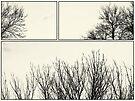 Tree Tops mono by KBritt