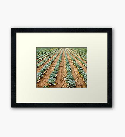 Vegetable Rows Framed Print