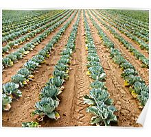 Vegetable Rows Poster