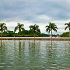 Palm Reflect by Rob Atkinson