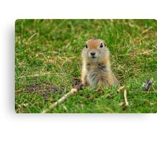 Check out my good side! Canvas Print